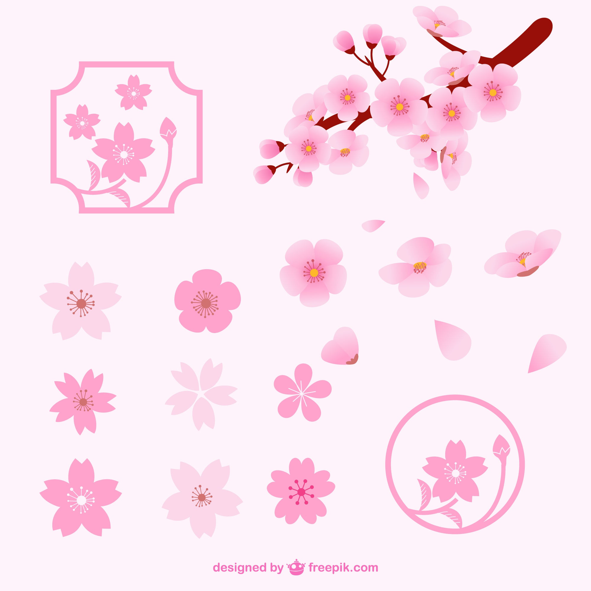 Different cherry blossom flowers