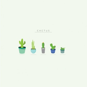 Different kind of cacti