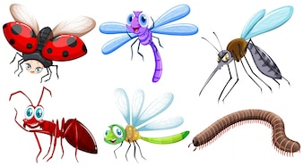 Different kind of insects illustration