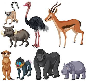 Different kind of wildlife animals illustration