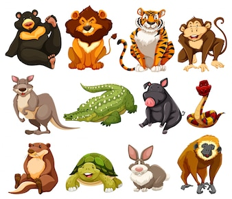 Different kinds of jungle animals illustration