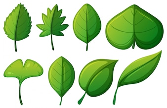 Different shapes of green leaves