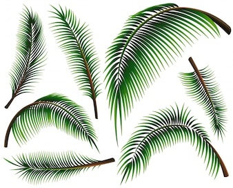 Different sizes of palm leaves illustration
