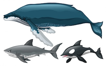 Different type of whale and shark illustration