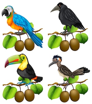 Different types of birds on kiwi branch illustration