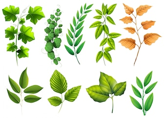 Different types of green leaves illustration
