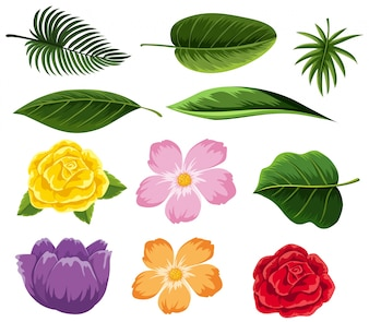 Different types of leaves and flowers