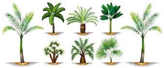 Different types of palm trees illustration