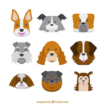 Dogs of different breeds pack in flat design