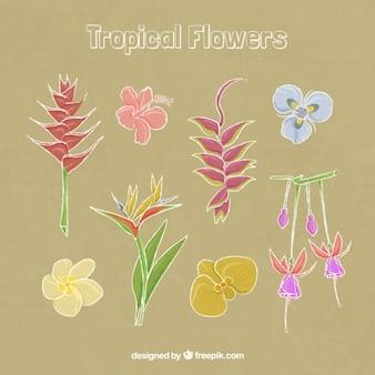 Elegant tropical flowers