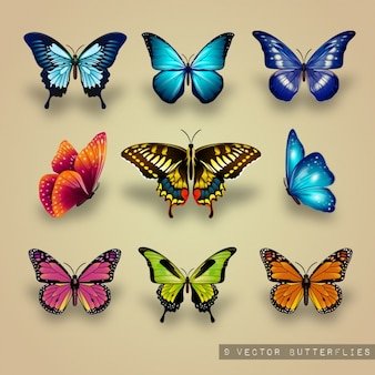 Excellent collection of butterflies