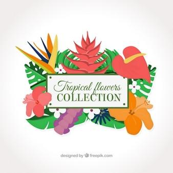 Exotic flowers decoration
