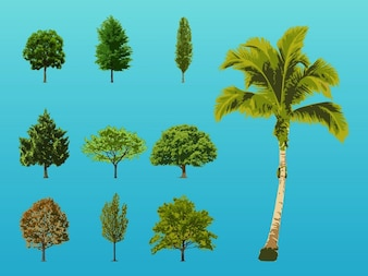 exotic forest Trees illustrations vector