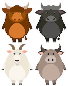 白い背景の家畜