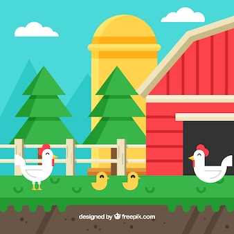 Farm background in flat design with chickens and chicks