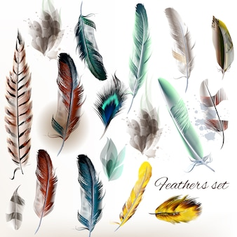 Feather designs collection