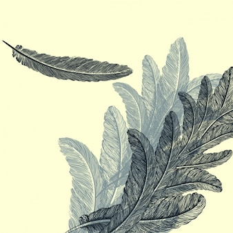 Feathers background design
