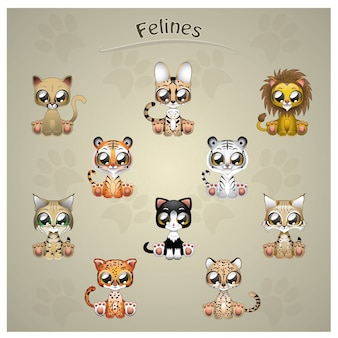 Felines animals collection