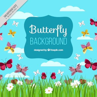 Field background with butterflies and flowers