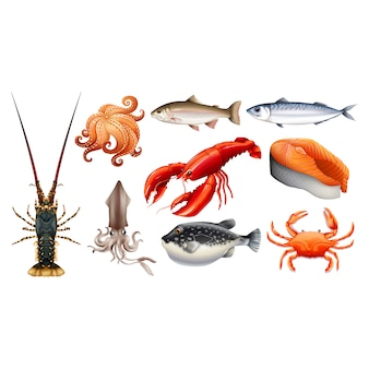 Fishes and shellfishes collection