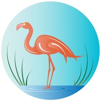 Flamingo bird in the water