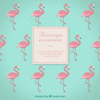 Flamingos background