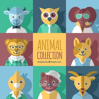 Flat Animal Collection