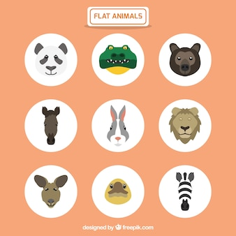 Flat animals collection