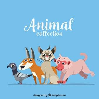 Flat animals together