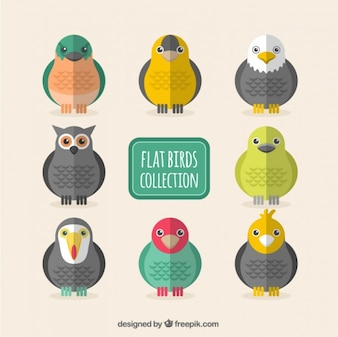 Flat birds collection