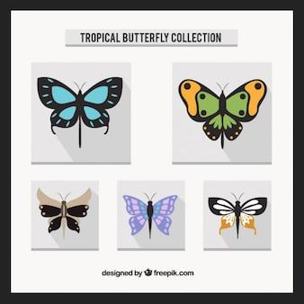 Flat butterflies pack