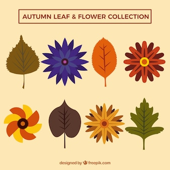 Flat collection of colorful autumnal leaves