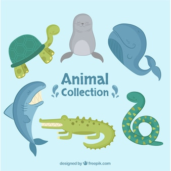 Flat collection of sea animals