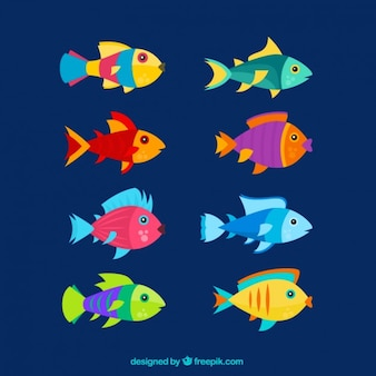 Flat colorful fishes set