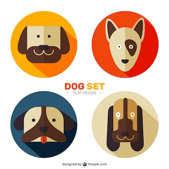 Flat nice dog set