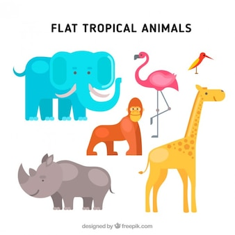 Flat tropical animals