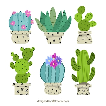 Floral cactus collection