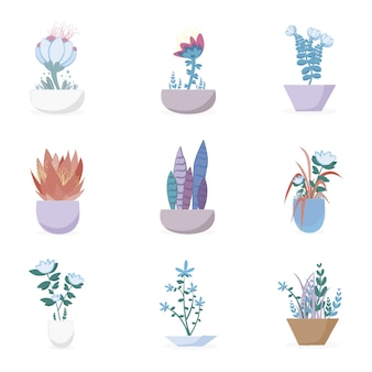 Flower pots collection
