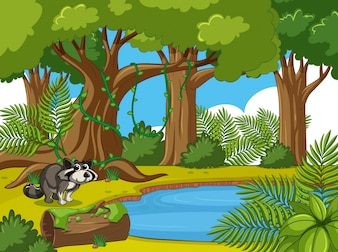 Forest scene with raccoon by the pond