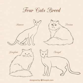 Four cats breed