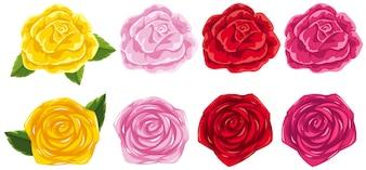 四つの異なる色のバラ