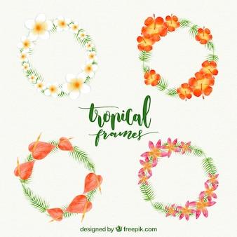 水彩の熱帯の花輪の4つ