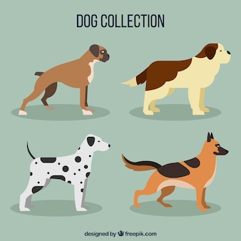 Four profile dogs in flat design