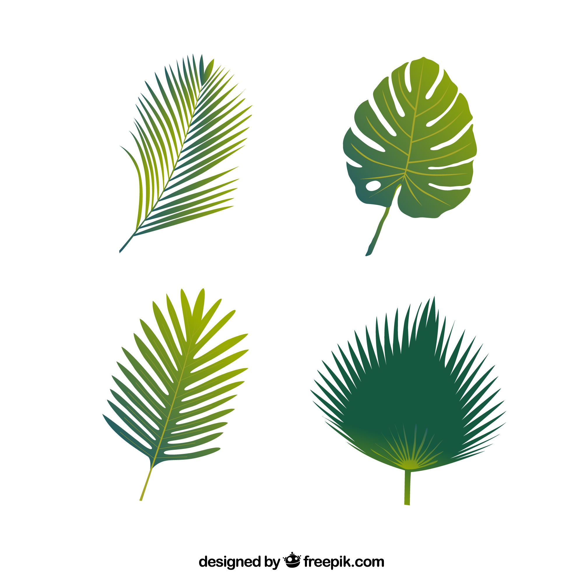 Four types of palm leaves