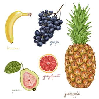 Fruits painted with watercolors