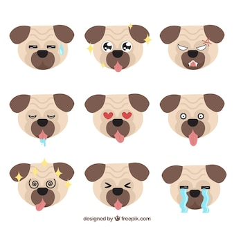 Fun variety of pug faces