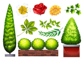 Gardening plants and flowers in many kinds