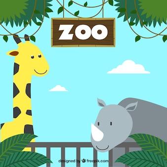 Giraffe and rhino in the zoo