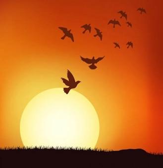glorious sunset illustrator logo vector pack