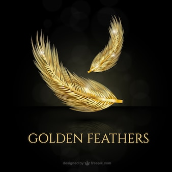 Golden bright feathers